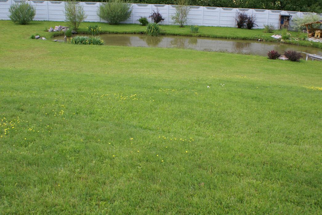 газон и небольшой искусственный водоем